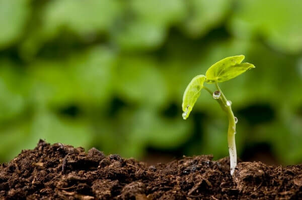Растительный грунт